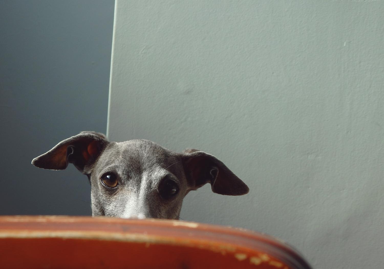 watching-you-darco