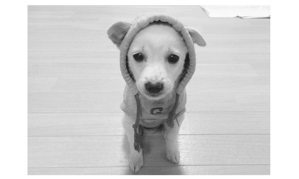 puppy-uni