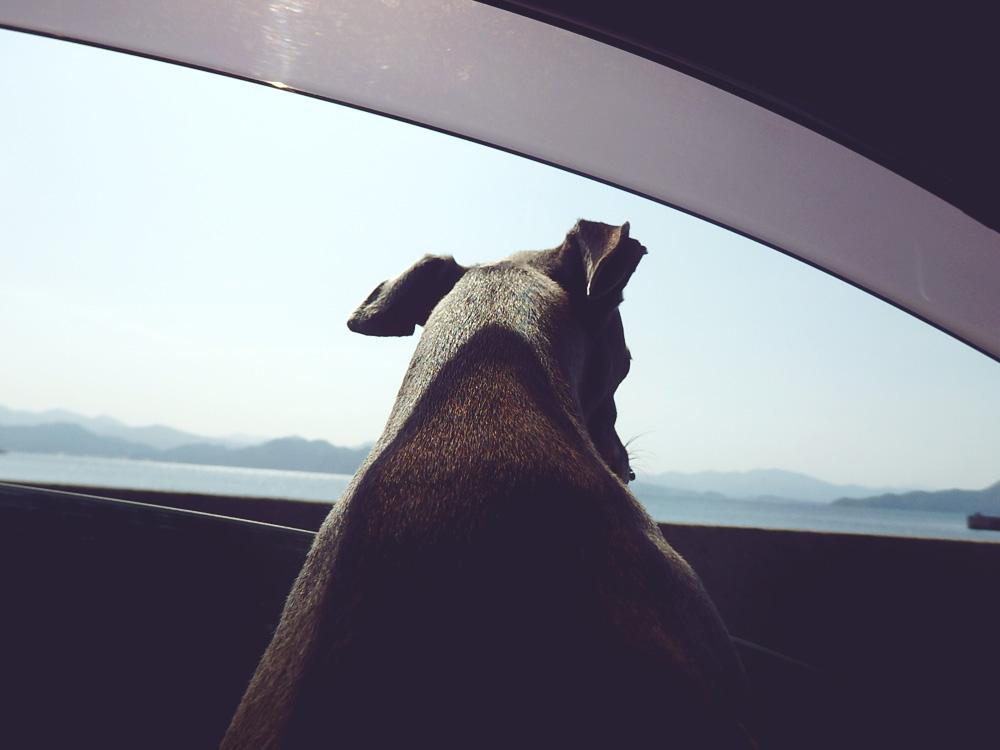 窓越しのダーコ