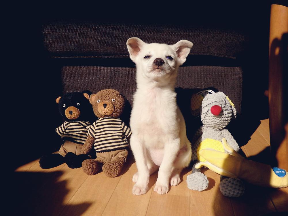 ダーコのおもちゃ隊とユニ